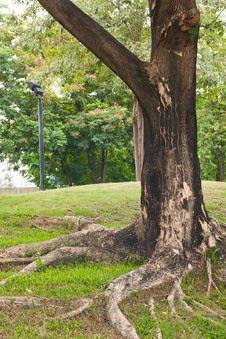 Free Tree On Yard Stock Images - 14313864