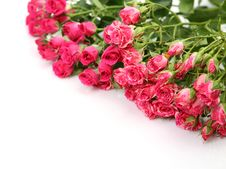 Free Pink Roses Stock Photography - 14314032
