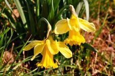 Free Yellow Flower Royalty Free Stock Photo - 14314255