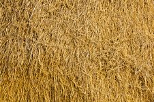 Free Agricultural Stock Photo - 14314690