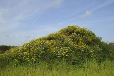 Free Small Hill With Flowers Royalty Free Stock Image - 14314796