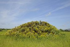 Free Small Hill With Flowers Royalty Free Stock Photo - 14314815
