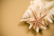 Free Seashell And Starfish Stock Photo - 14314820