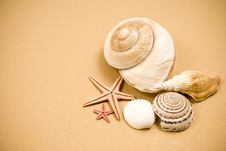 Free Seashell And Starfish Royalty Free Stock Photo - 14314865