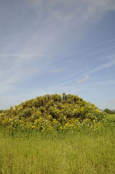 Free Small Hill With Flowers Royalty Free Stock Image - 14314866