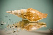 Free Seashell Stock Photos - 14314993