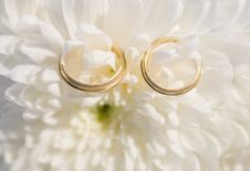 Free Wedding Rings Stock Photos - 14315333