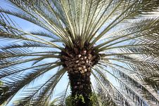Free Palm Tree Across Blue Sky Royalty Free Stock Photo - 14315785