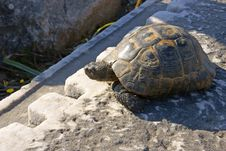 Free Turtle On A Land Royalty Free Stock Photo - 14315905
