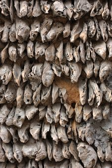 Free Oyster Shell Wall Royalty Free Stock Photography - 14317357