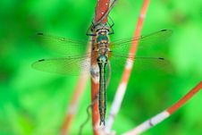 Free Dragonfly Stock Photo - 14318250