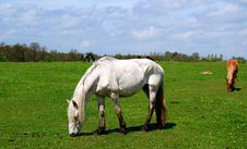 Horse In A Pasture Stock Image