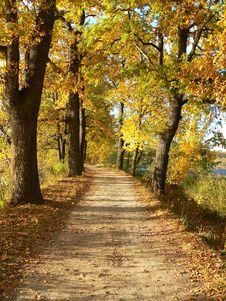 Free Autumn Way Royalty Free Stock Photography - 14319397