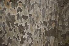 Free Tree Bark Royalty Free Stock Photos - 14319798