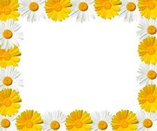 Daisy Frame - High Resolution Stock Photos