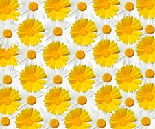 Daisy Texture - High Resolution Royalty Free Stock Photography