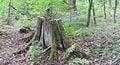 Free Tree Stump Stock Photography - 14322032