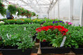 Free Flowers In A Greenhouse Stock Image - 14326501