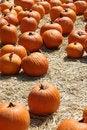 Free Field Of Orange Pumpkins Stock Photo - 14329650