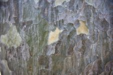 Free Tree Bark Royalty Free Stock Image - 14320266