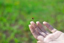 Free Flying Ladybug Stock Photos - 14322303