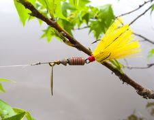 Free Fishing Lure Stuck In Tree Stock Image - 14322371