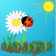 Free Ladybird On A Daisy Stock Photos - 14322483