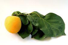 Free Apricot Stock Image - 14322711