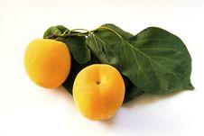 Free Apricot Stock Photo - 14322770