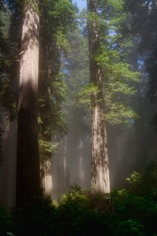 Free Sunbeams In Forest Stock Photos - 14322943