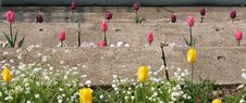 Tulips On The Stone Steps Royalty Free Stock Photos