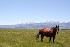 Free Horses Grazing Royalty Free Stock Photos - 14322998