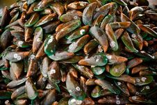 Free Mussel. Stock Images - 14323914