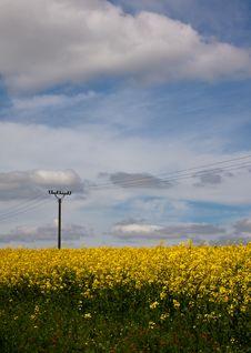 Free Czech Yellow Field Stock Image - 14323921