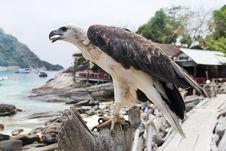 Free Bird Of Prey Royalty Free Stock Photo - 14324405