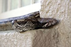 Free Snake On Window Sill Royalty Free Stock Image - 14325576