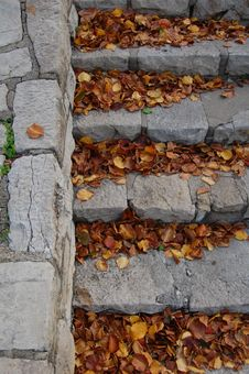 Free Leaves On Stairs Stock Photos - 14327183