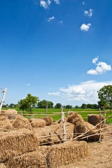 Free Straw Stock Images - 14328094