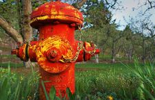 Free Old Red And Yellow Fire Hydrant In Orchard Stock Image - 14328491