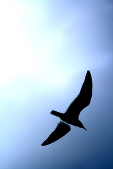 Blue Sky Sea Gull Silhouette. Stock Photos