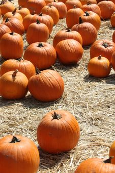 Free Field Of Orange Pumpkins Stock Photo - 14329650