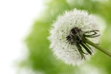 Free White Dandelion,Closeup. Royalty Free Stock Images - 14329809