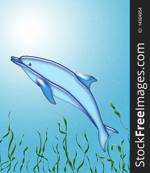 Dolphin swim under water with algae
