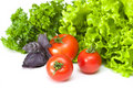 Free Tomatoes With Salad Stock Photos - 14331683