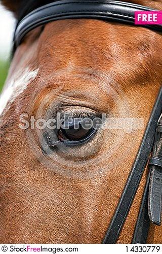 Free Horse Eye Close Up Horse Eye Closeup Royalty Free Stock Images - 14330779