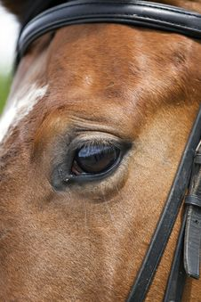 Horse Eye Close Up Horse Eye Closeup Royalty Free Stock Images