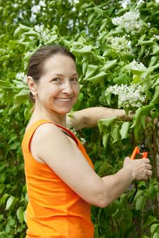 Free Woman Gardener With Flowers Royalty Free Stock Photo - 14332055