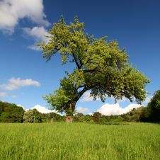 Free Lonely Tree Royalty Free Stock Photos - 14332148