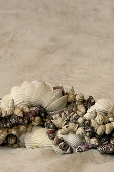 Free Seashells Stock Photo - 14332400