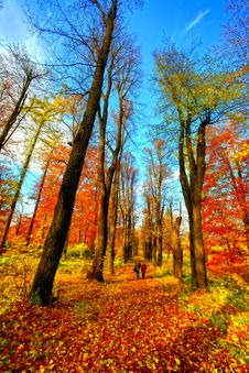 Free Autumn In The Park Royalty Free Stock Photo - 14332555